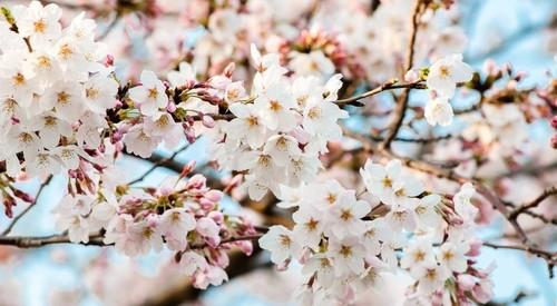 春ドラマ2017年4月スタートのドラマまとめ一覧