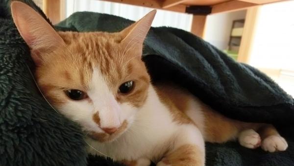 NHKドラマ「ブランケット・キャッツ」西島秀俊と吉瀬美智子、ぱるると猫の物語