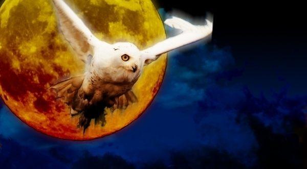 映画「ラプラスの魔女」主演は櫻井翔、広瀬すずと福士蒼汰が共演、原作は東野圭吾