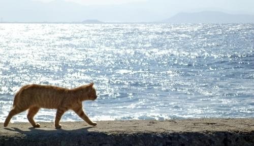 映画「旅猫リポート」猫の視点で描かれる福士蒼汰の感動物語