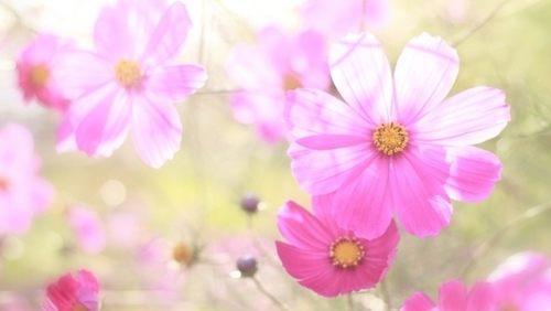 映画「九月の恋と出会うまで」高橋一生と川口春奈の恋愛物語