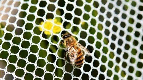 映画「蜜蜂と遠雷(みつばちとえんらい)」松岡茉優に松坂桃李 ピアノコンクール物語 原作は恩田陸