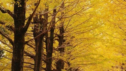 映画「記憶屋」記憶を消せる怪人のミステリー 山田涼介に芳根京子、蓮佛美沙子と佐々木蔵之介